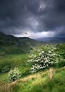 North Wales: How Green Was My Valley 2 by Angie Latham