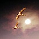 Fly Me To The Moon by naturelover