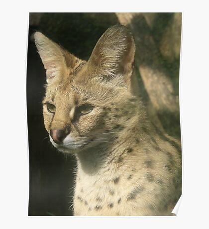 Sweet Serval Poster