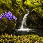 Bluebell Stream von DafyddEm