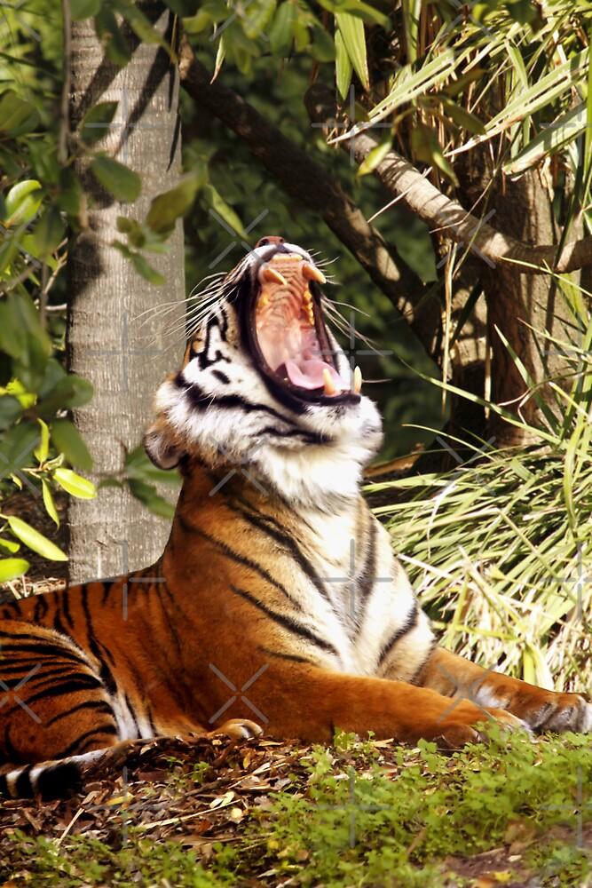 Sumatran Tigress In the Jungle by Sandra Chung
