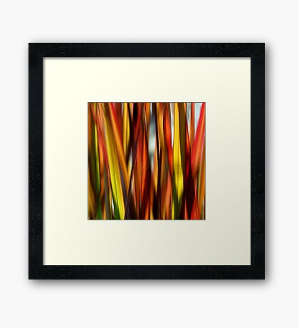 Grasslands Framed Print