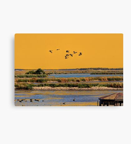 Early Morn on the Marsh Canvas Print