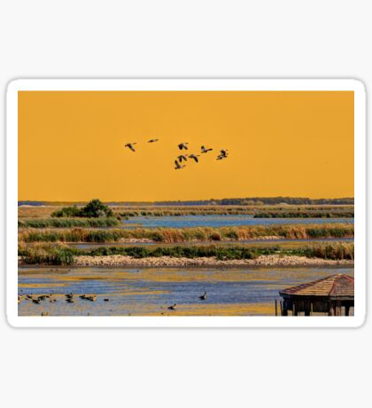Early Morn on the Marsh Sticker