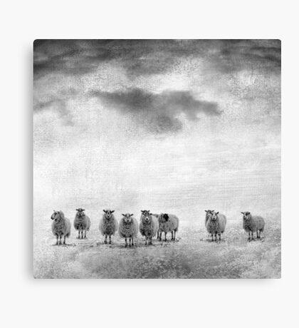 woollen Canvas Print