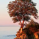 Sunset and the Arbutus Tree by TerrillWelch