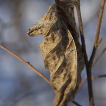 Dead Leaf by raquelfletcher