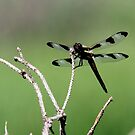 Transparent Wings by Larry Trupp
