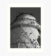starlings roost Art Print