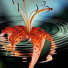 Water Lilly by LudaNayvelt