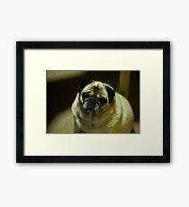 Puggy Love Framed Print