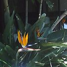 Bird of paradise by Faithzebb