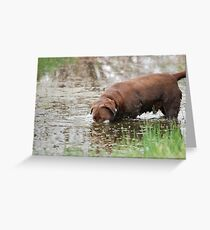 Frog Hunting Strategy Greeting Card