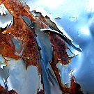 Glacier by Kathie Nichols