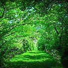 A Green Garden by Linda Miller Gesualdo