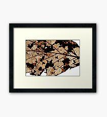 Dead Dry  leaf Framed Print