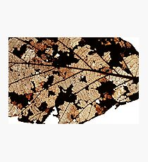 Dead Dry  leaf Photographic Print