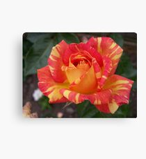 Red or Yellow Canvas Print