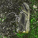 Lost Sole by linmarie
