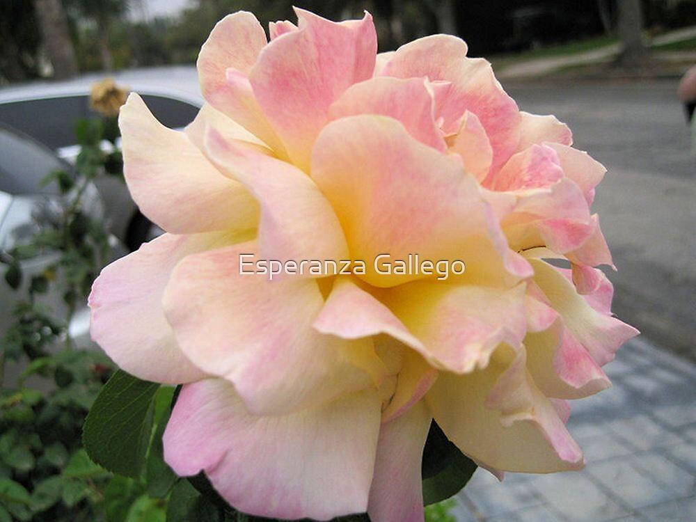 Big, Pink and Delicate by Esperanza Gallego