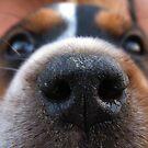 Nose to nose by rasim1
