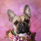 The Frenchie Collection | Bella by Peggy Colclough