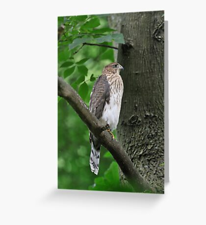 Quietly Perched Greeting Card