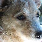 Miss Roxy Peppercorn by pallyduck