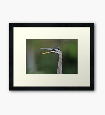 Say What! Framed Print