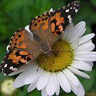 Lazy Daisy Butterfly by Mattie Bryant