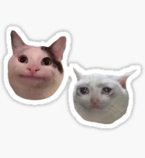 Polite and Sad Crying Cat Memes Sticker