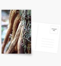 roots Postcards
