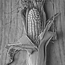 Corn Revealed by Janet Rogerson