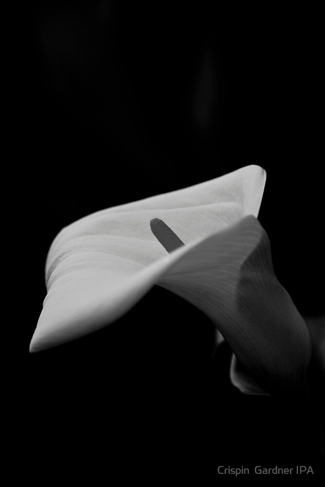 Lily by Crispin  Gardner IPA