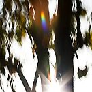 The rainbow tree by LouD