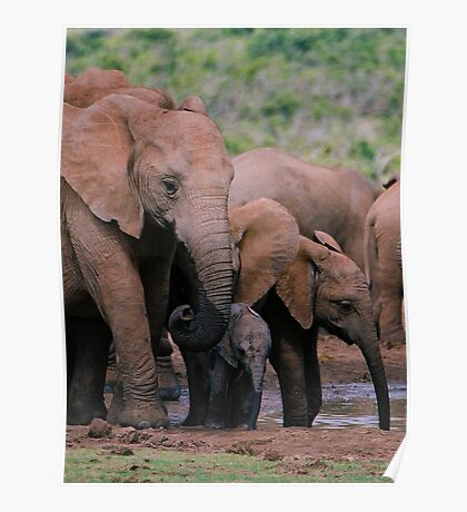 Family at the water hole Poster