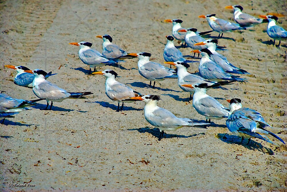 The Seagull Brigade by photorolandi