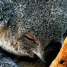 Atop a Tree a Koala Sleeps by paintingsheep