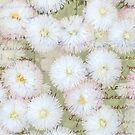 Love Letter on Daisies by Phototrinity