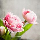 Mothers Day Tulip by Gben