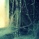 deception- spider's web  by afure