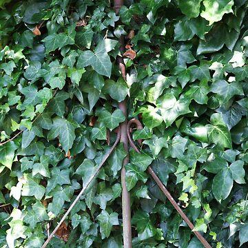 Ivy by leizure