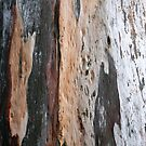 Eukalyptus von agnessa38