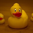 Rubber Duckies by Jason Green