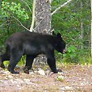 """2 Yr Old Bear  """"You Like-a- My Tracks? I Make-a Some More by MaeBelle"""