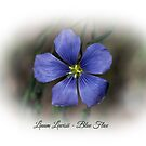Linum Lewisii - Blue Flax by Len Bomba