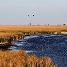 Autumnal Morning on the Marsh by Larry Trupp