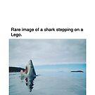 Rare photo of a shark stepping on a lego by memeshirtees