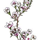 Waxflower branch with pink flowers by stasia-ch