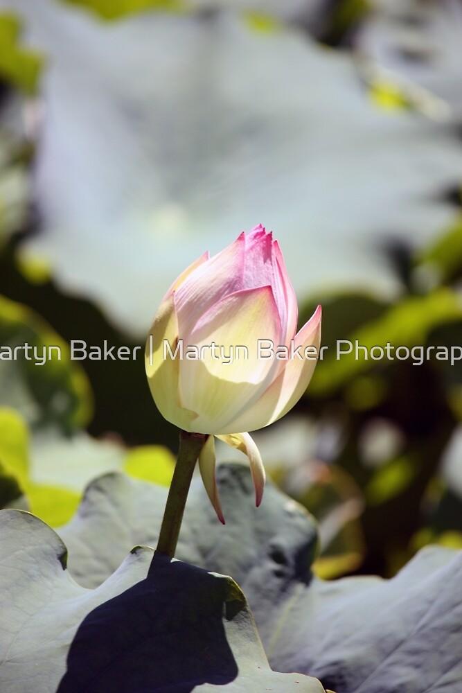 Pretty in Pink by Martyn Baker | Martyn Baker Photography